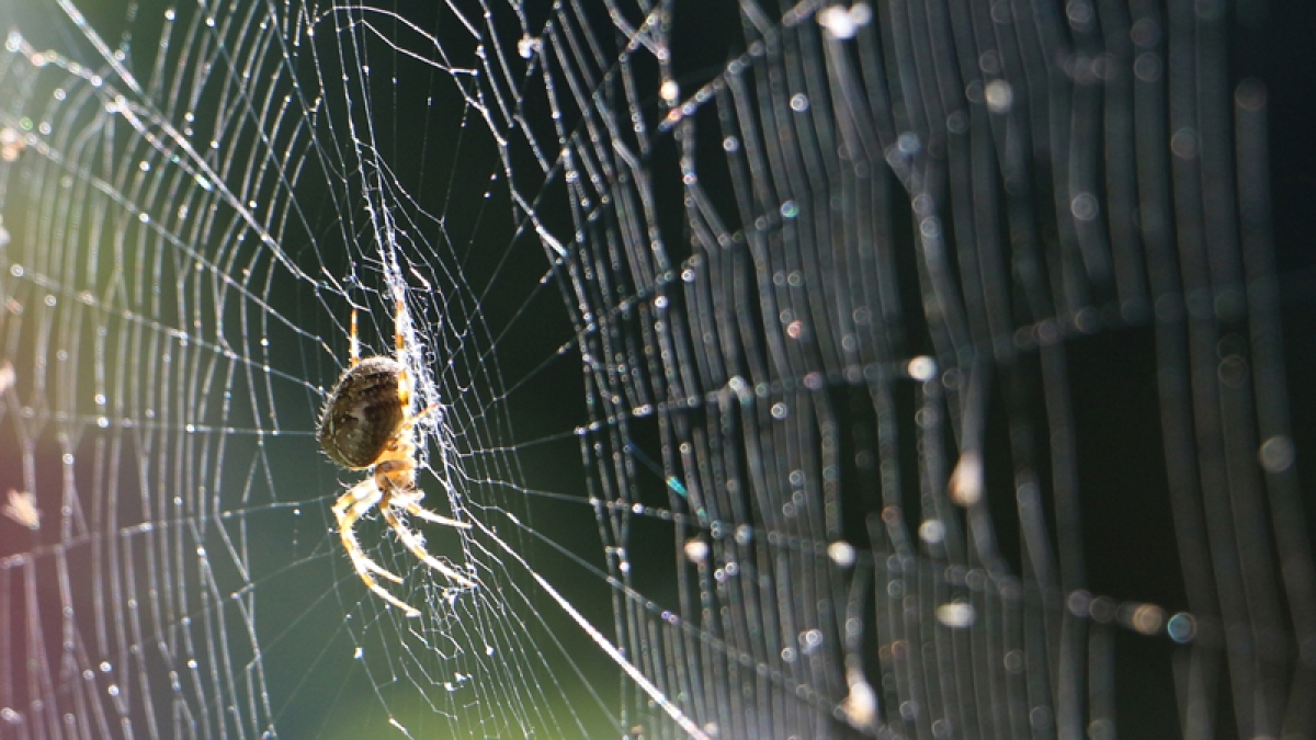 Spider silk vaccine may help prevent cancer