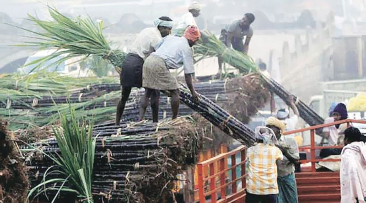 Sugar mills get govt relief of Rs 8,500-cr