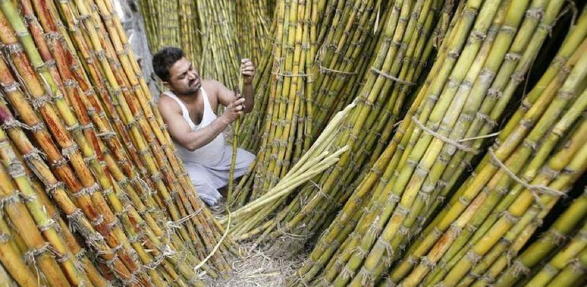 Centre raises sugarcane price by Rs 20 a quintal