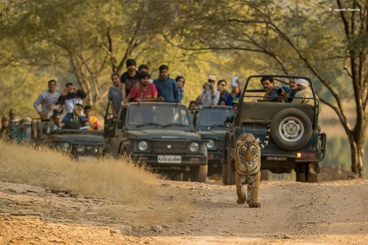 International Tiger Day 2018! 10 places in India where you can go Tiger-spotting!