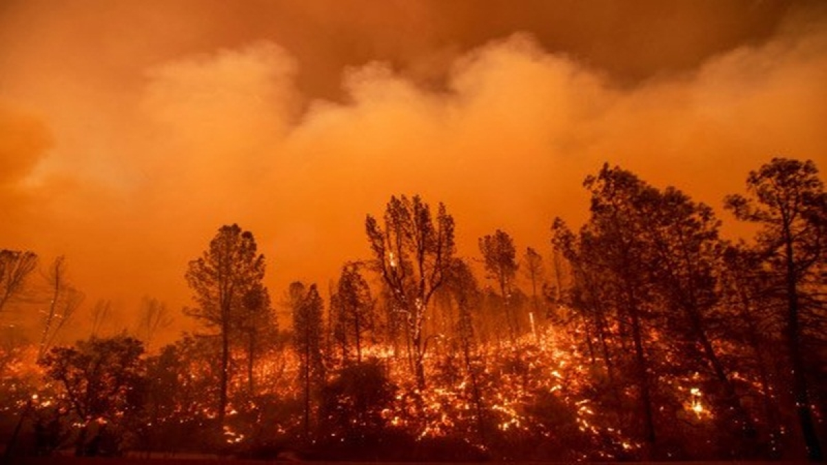 California wildfire death toll rises to 77