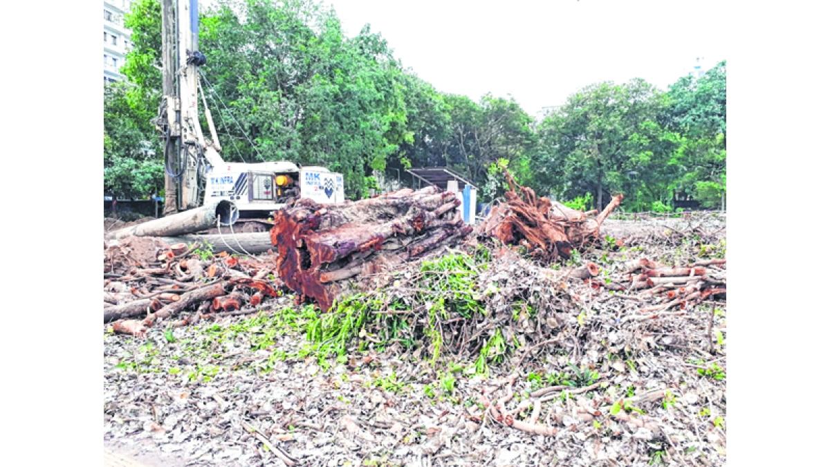 Mumbai: Decades-old trees to make way for Dr B R Ambedkar memorial