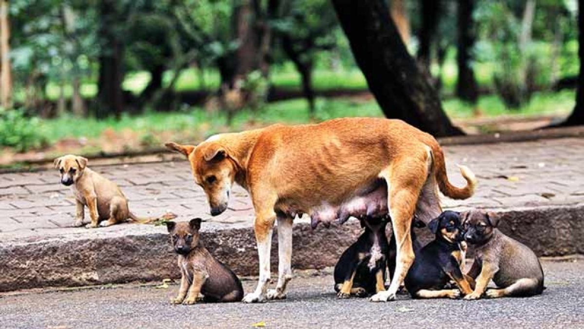 National Puppy Day : Residents struggle to get rid of stray dogs