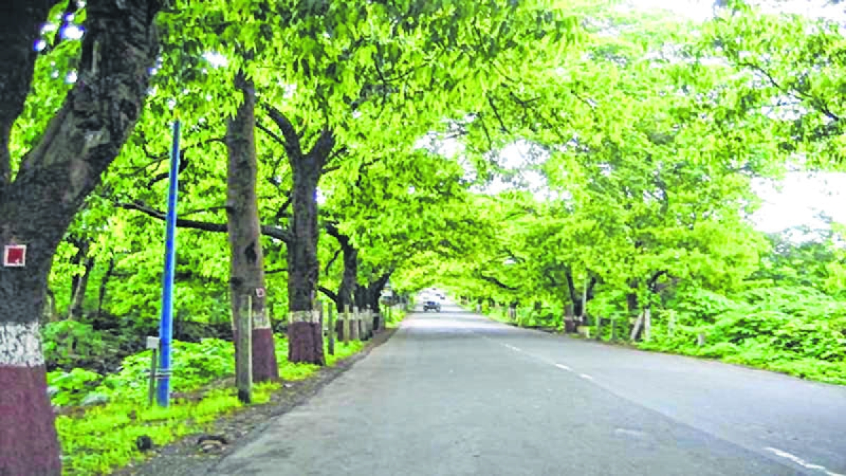 BMC yet to find a tree expert who fulfils  Bombay High Court criteria