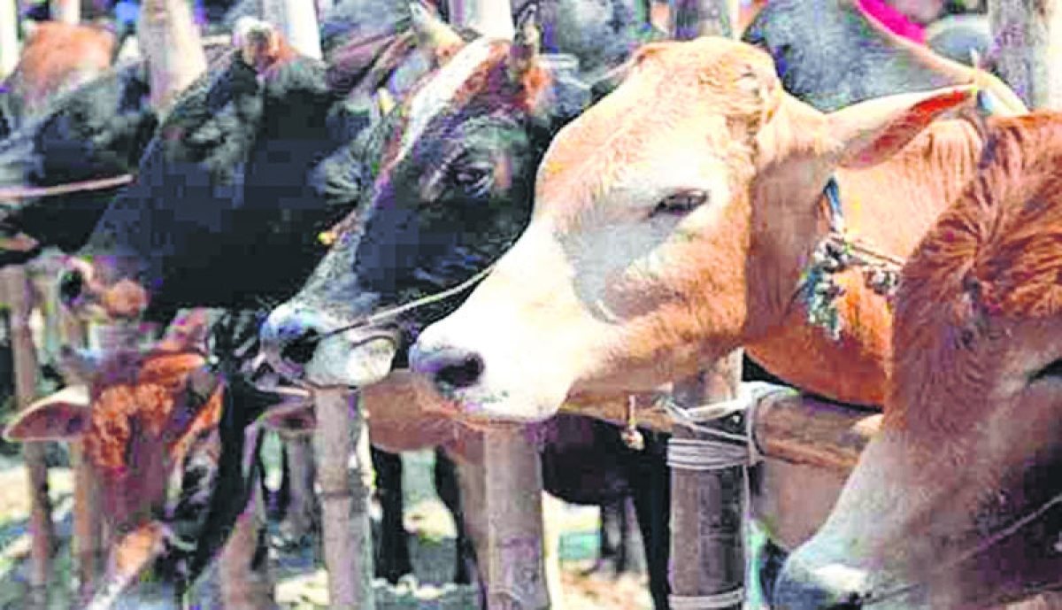 Bhopal: MNCs roped in under part chart to built gaushalas