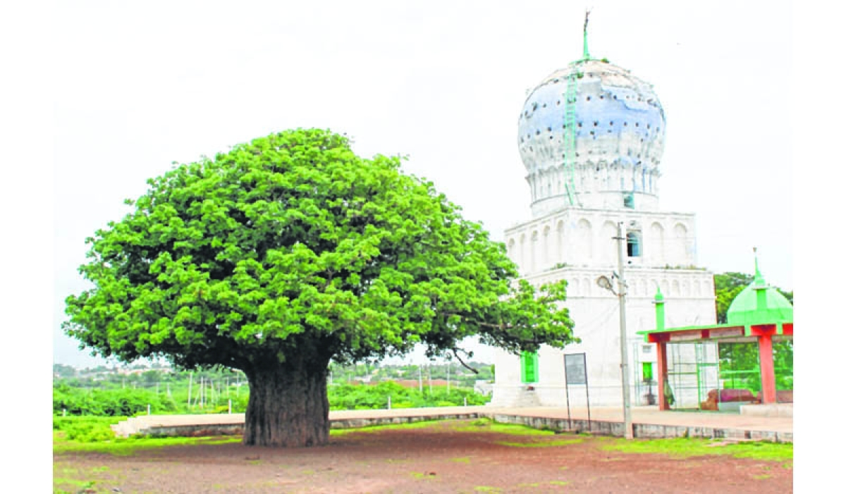 Mumbai: Maulvi claims 'miracle' fruits from trees near dargah can help transgenders procreate