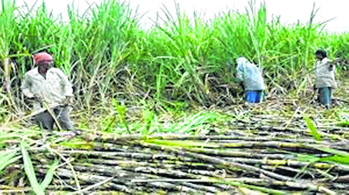 Maharashtra government issues notices to sugar mills over Rs 1,200 crore dues