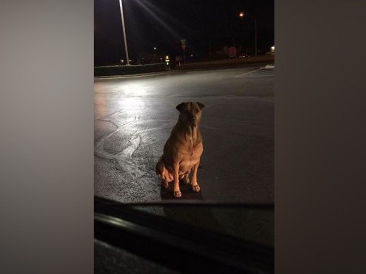 This pooch pretends to be a stray dog just to get some free McDonald hamburgers!