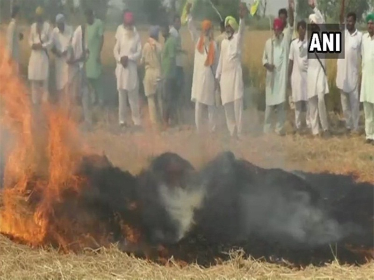 Punjab: Stubble burning continues, farmers say they 'have no option'