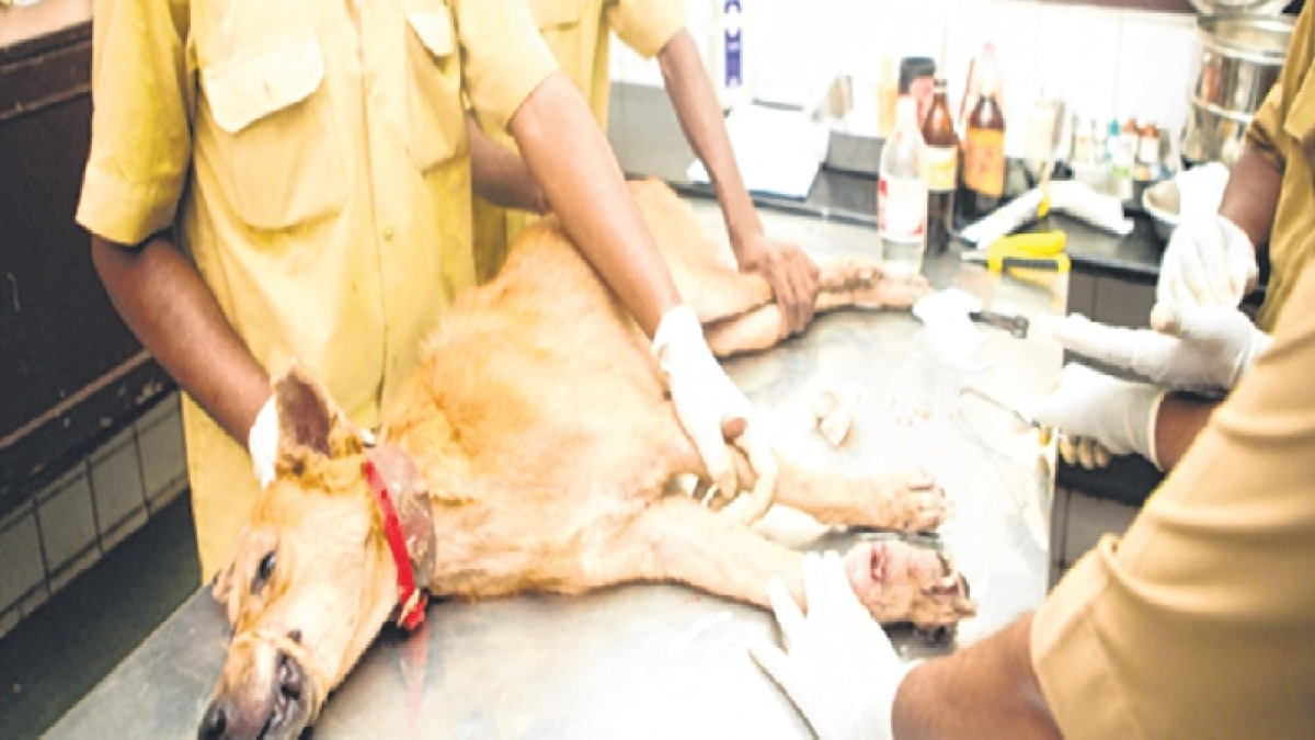 Mumbai: October heat takes its toll on animals, more than 100 suffering from dehydration