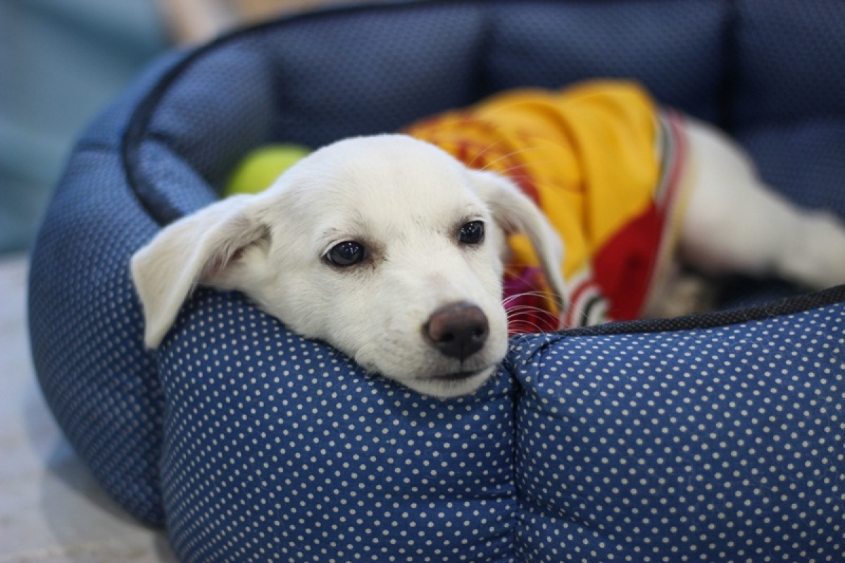 Indore: Pet puja required during winters