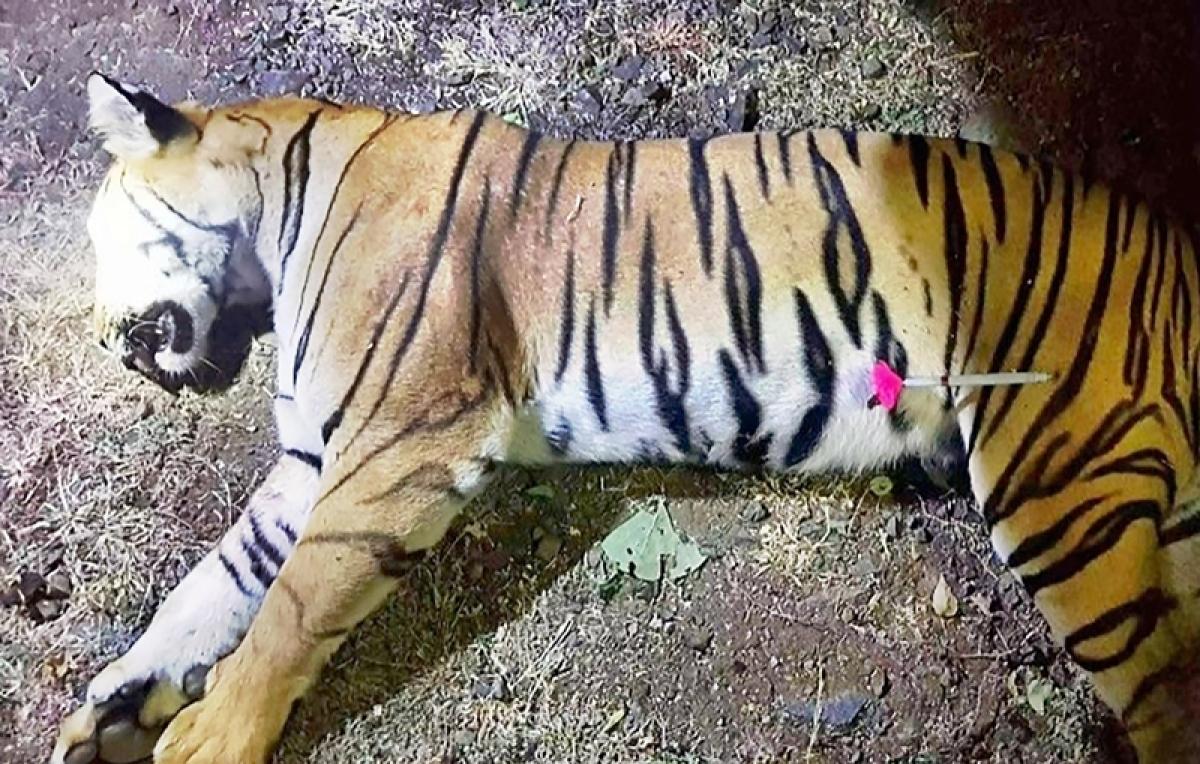 Tigress Avni killing: Scores attend protest march in Mumbai