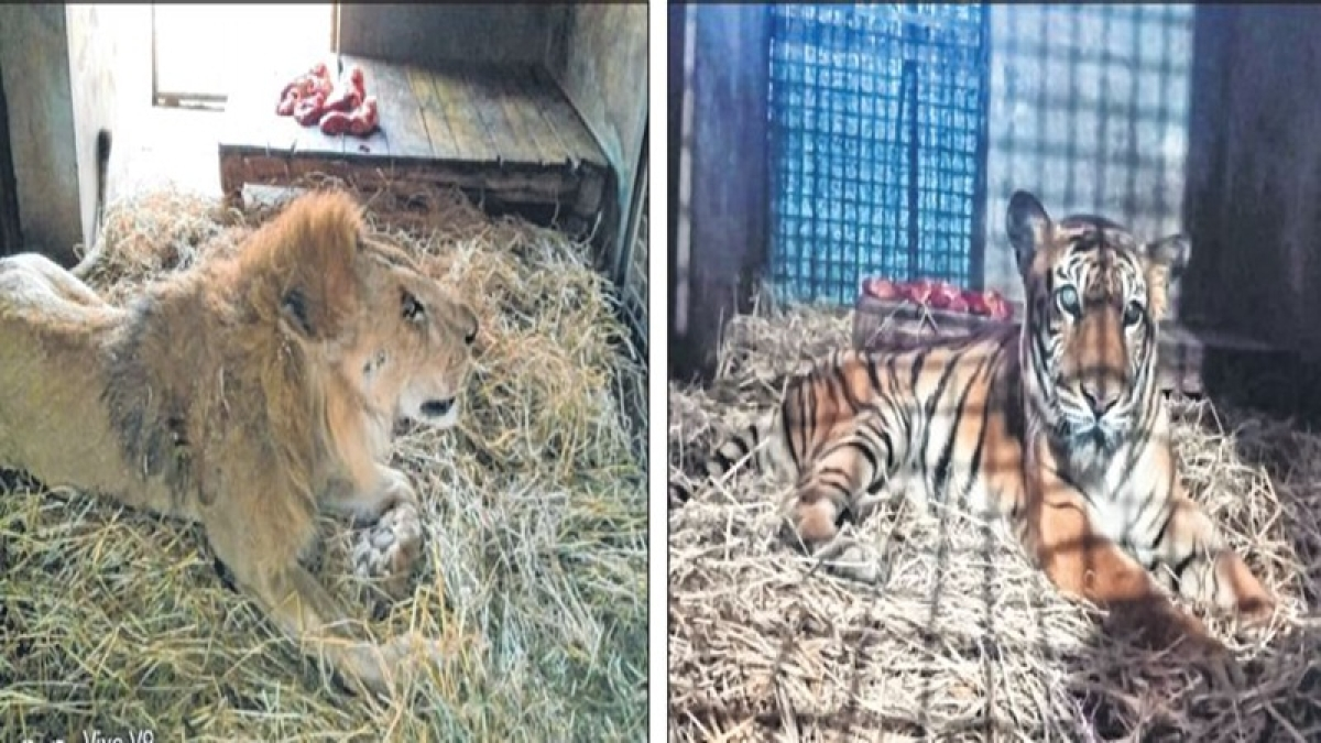 Bhopal: Van Vihar administration makes special arrangements for animals to beat chill