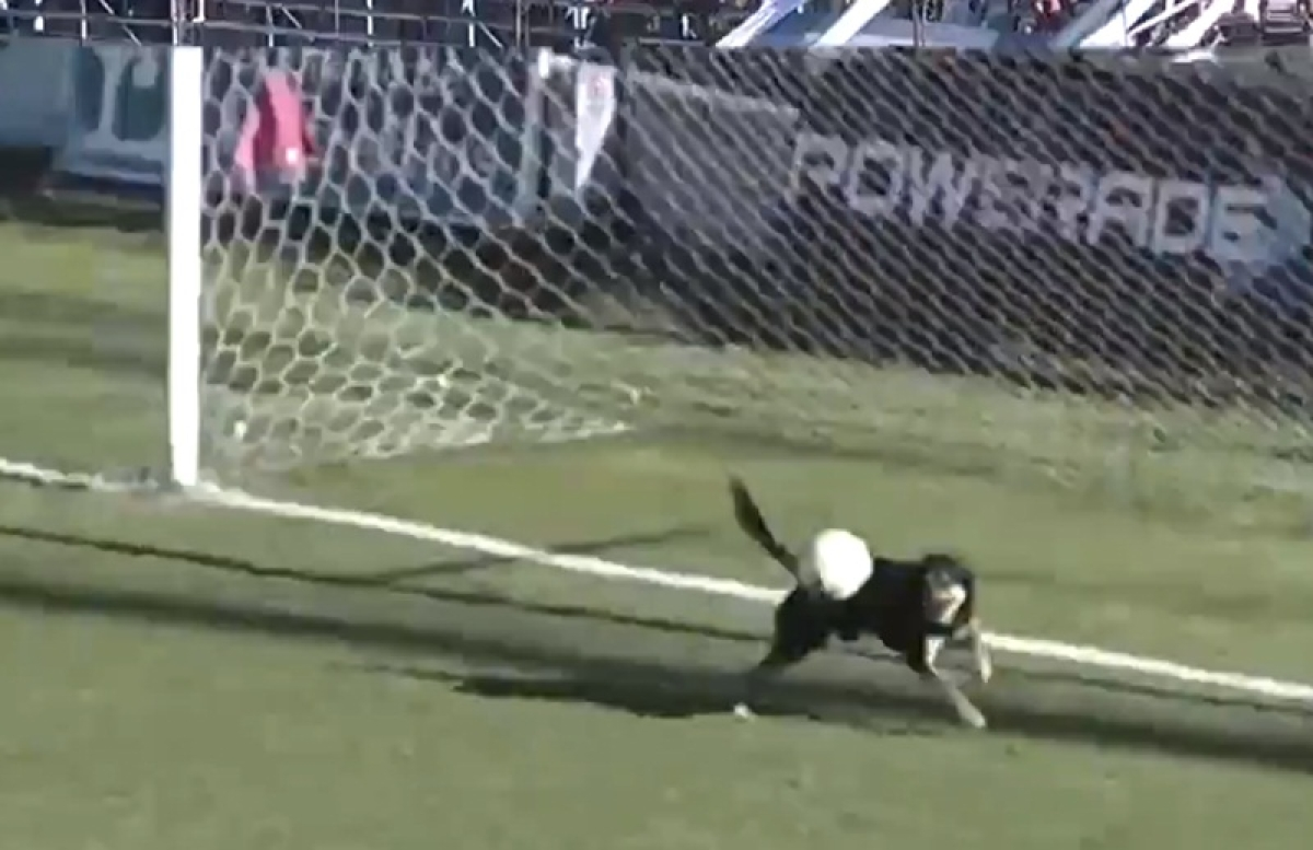 Hot Dog! Canine comes to Argentinian goalkeeper's rescue, saves goal in style