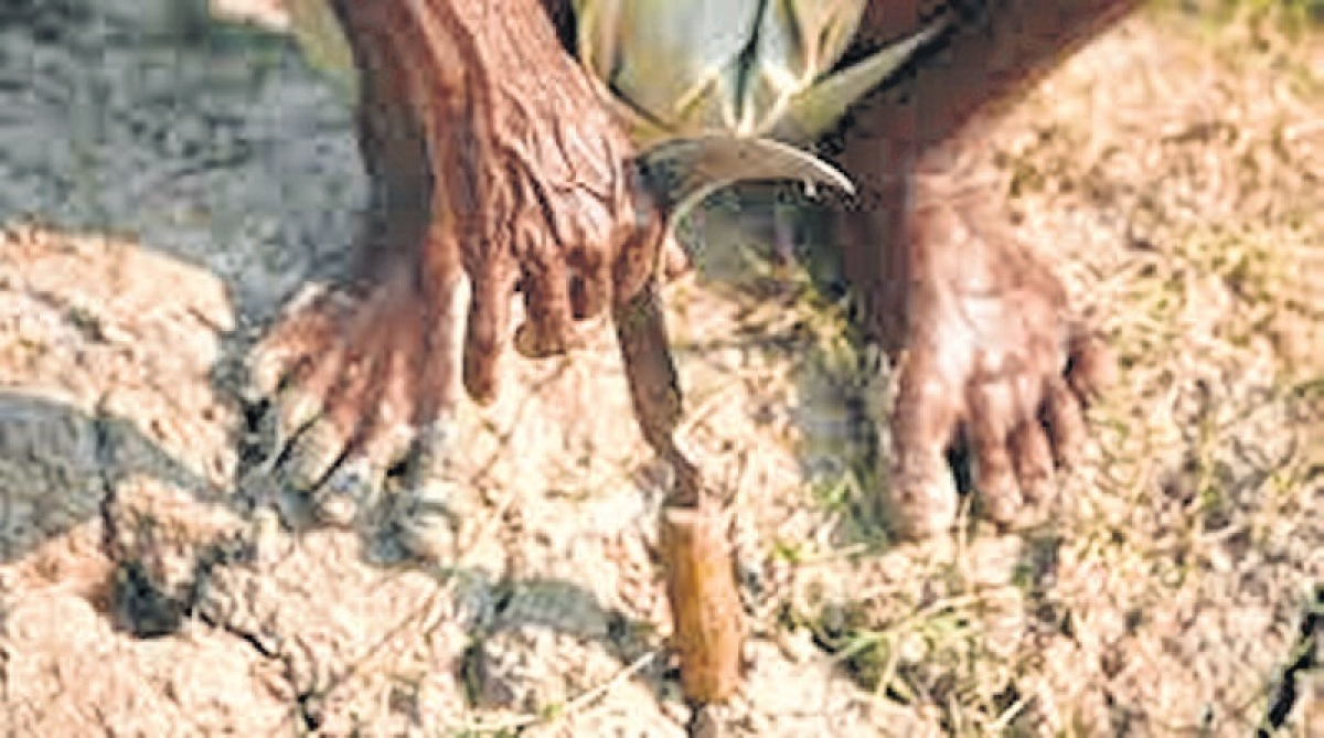 Bhopal: State witnesses two farmer suicides