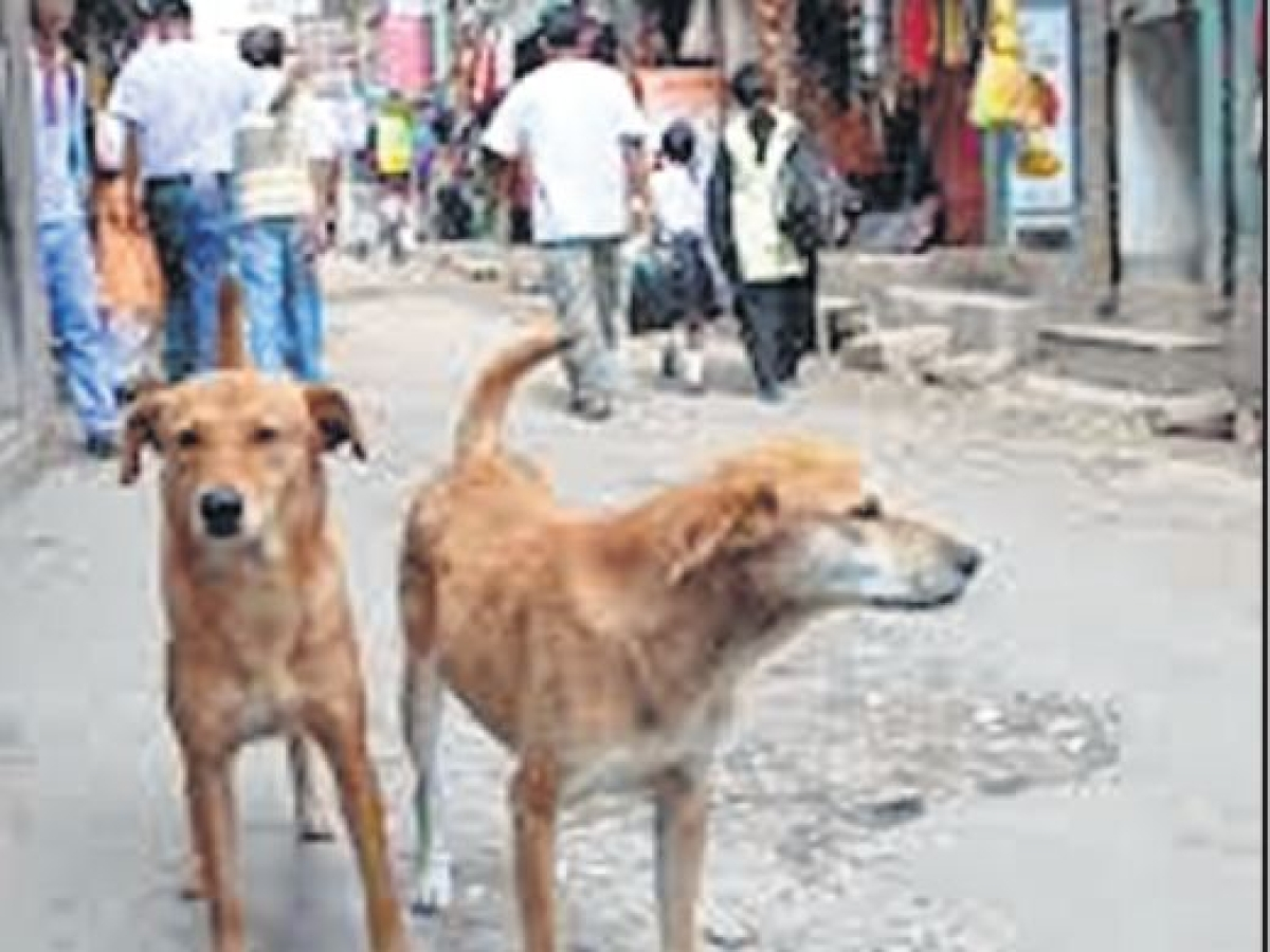 Bhopal: Biker dies after hitting a stray dog
