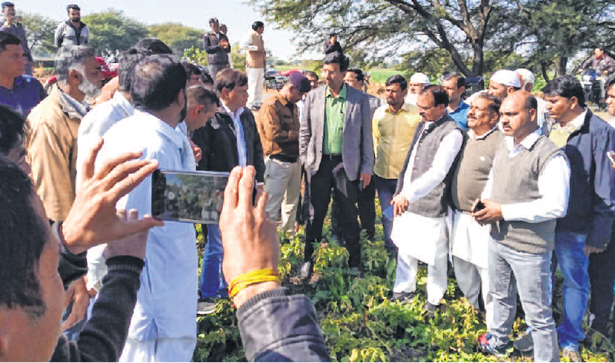 Ujjain: Collector, MLAs visit field damaged by frost