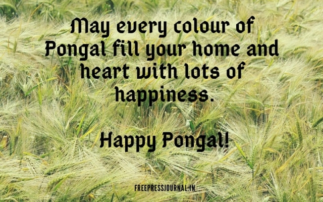 Pongal 2019: Wishes, greetings, images to share on SMS, WhatsApp, Facebook