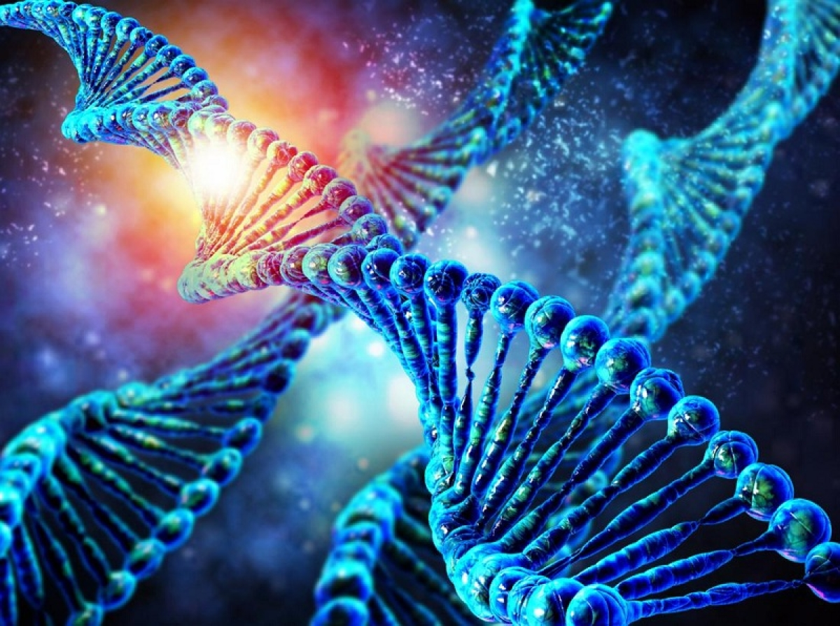 Gene editing therapy may reverse ageing
