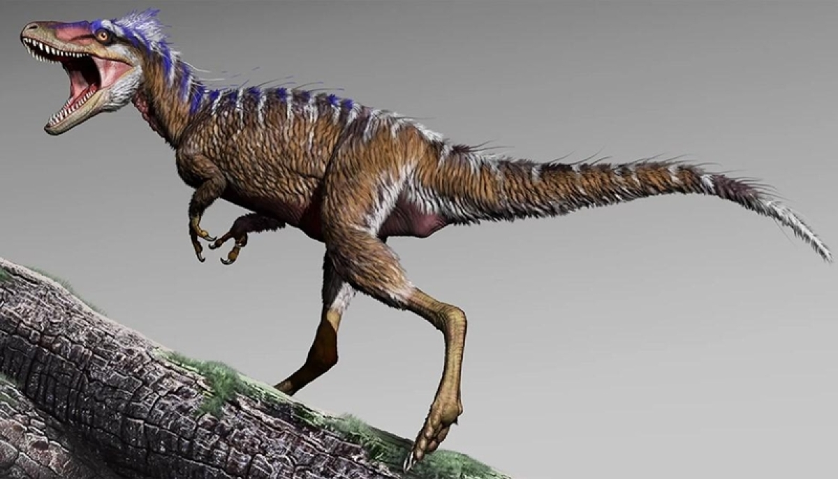 Tiny T-rex not a species but 'teens' who didn't grow up