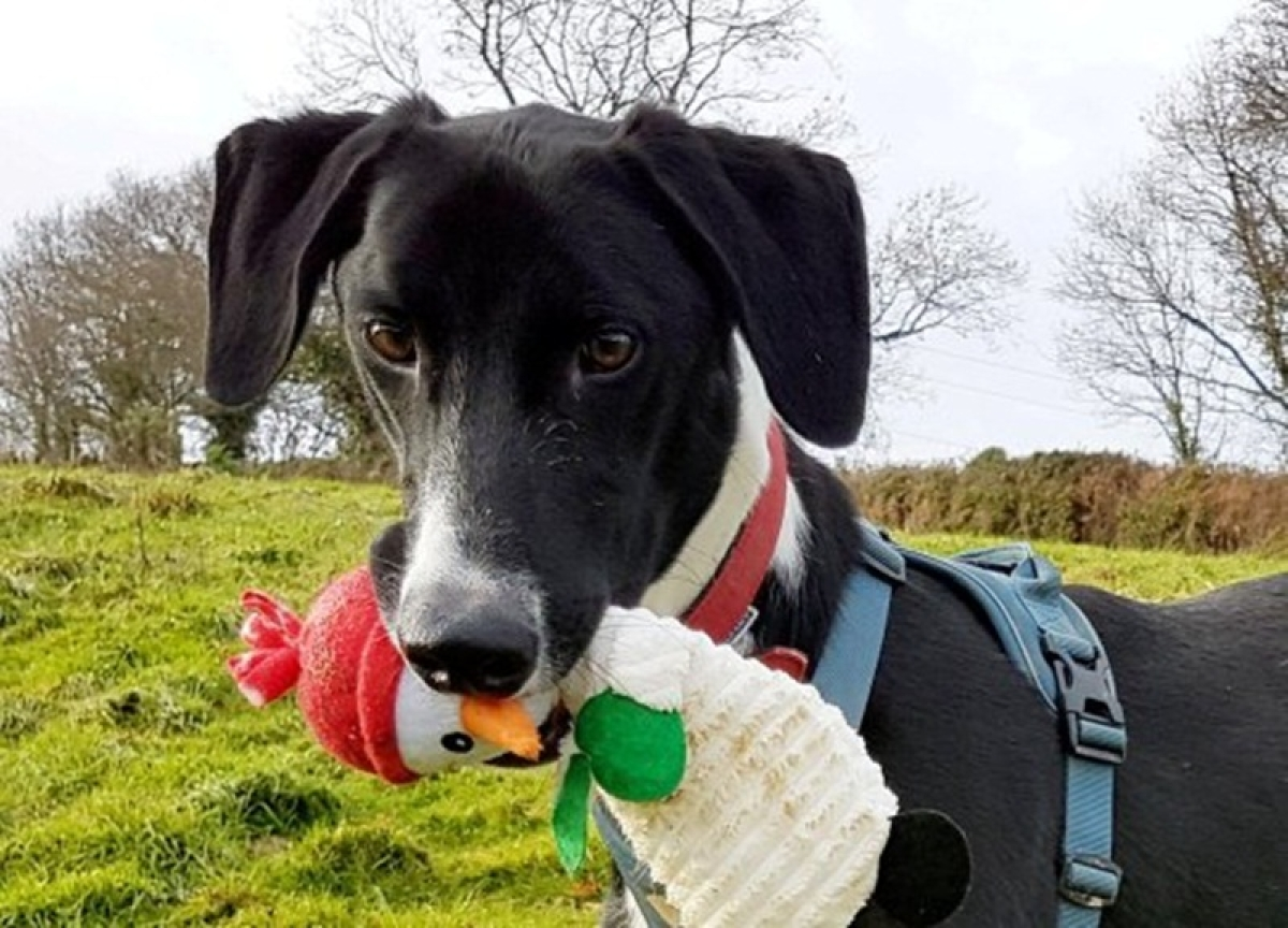 UK's 'loneliest dog' still waiting for someone to rescue him