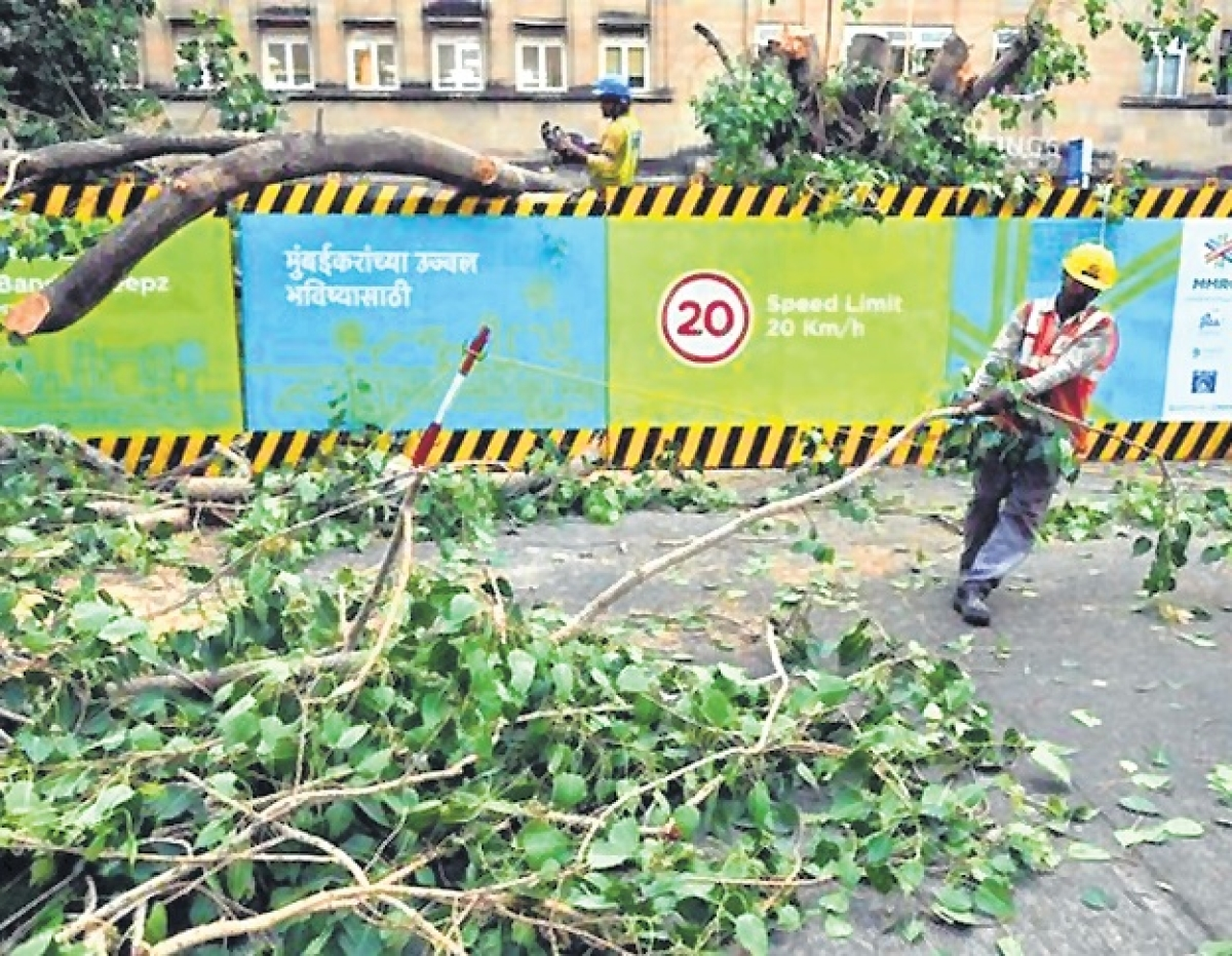 Mumbai wants both Metro and Trees: Bombay High Court