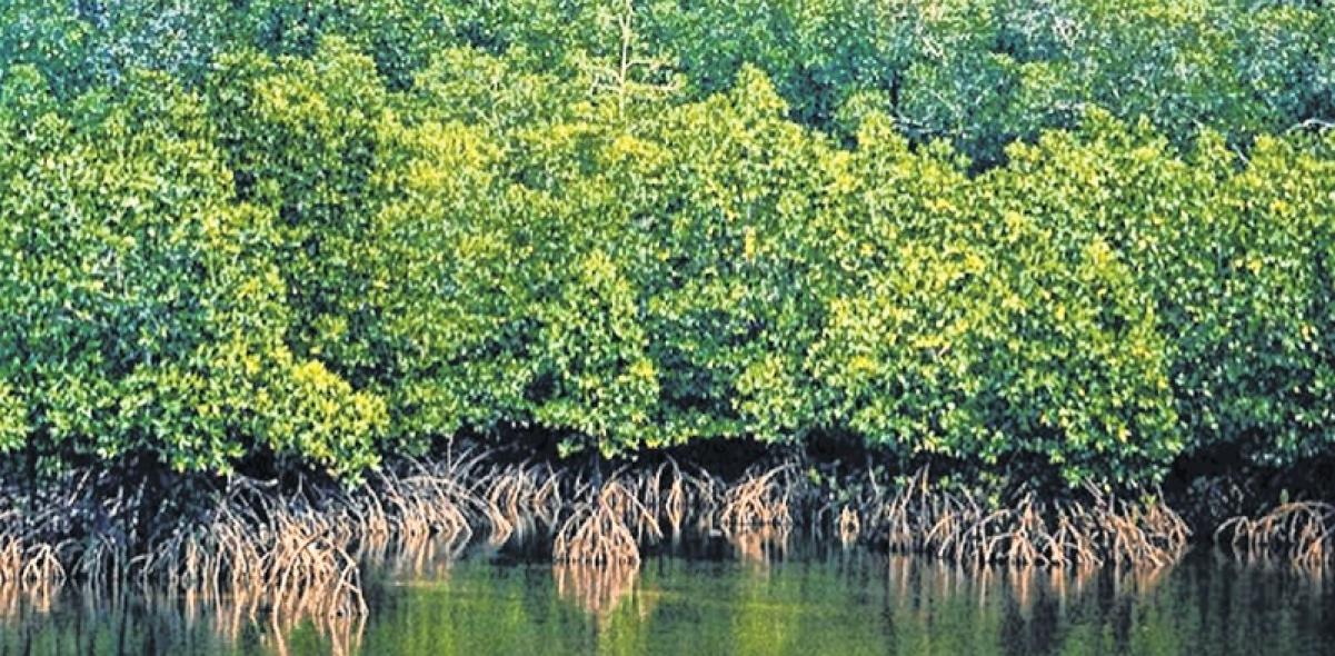 Society moves Bombay High Court against destruction of mangroves in Versova