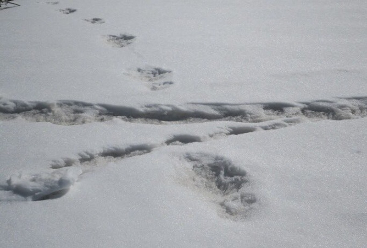 'Ghost' footprints hidden since end of Ice Age found