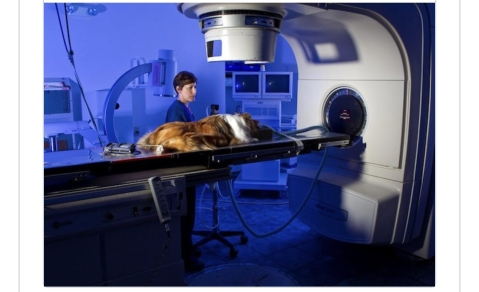 A Dog In The US Gets Better Treatment Than Cancer Patients In Lagos - Dr. Olufunmilayo