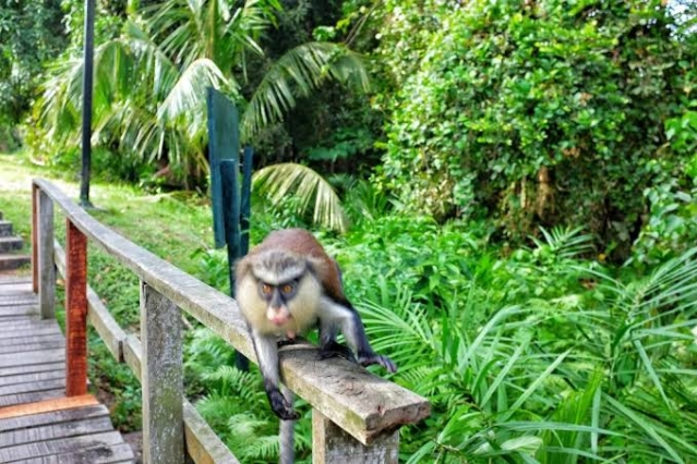 A monkey at the Lekki Conservation Centre
