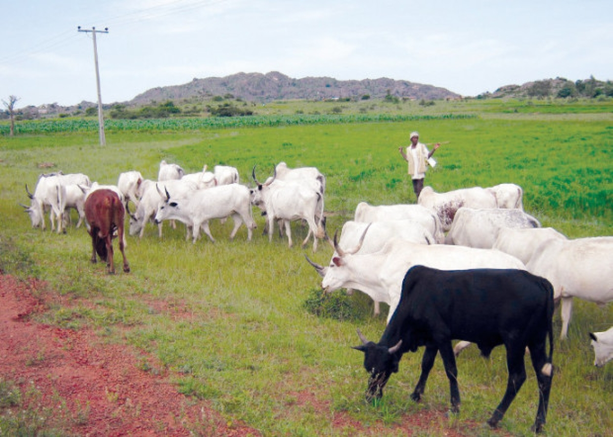 Benue, Plateau States Reject Proposed Grazing Reserve Remodelling