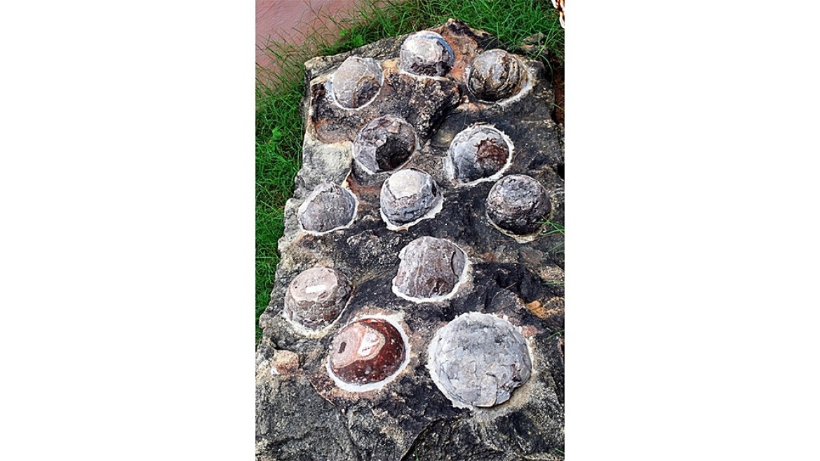 Fossilized Dinosaur eggs