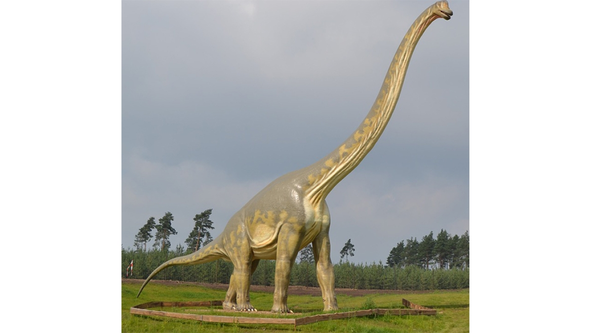 A model of Sauropod