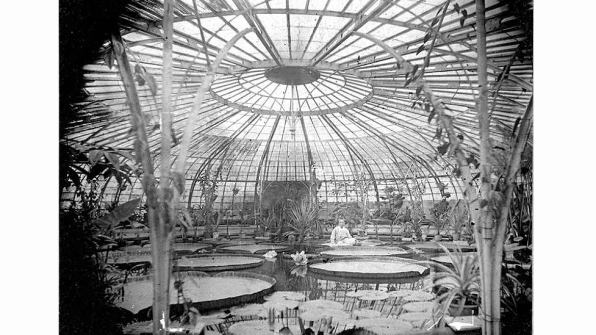 Greenhouse at Hortus Botanicus of Leiden (1890-1900)
