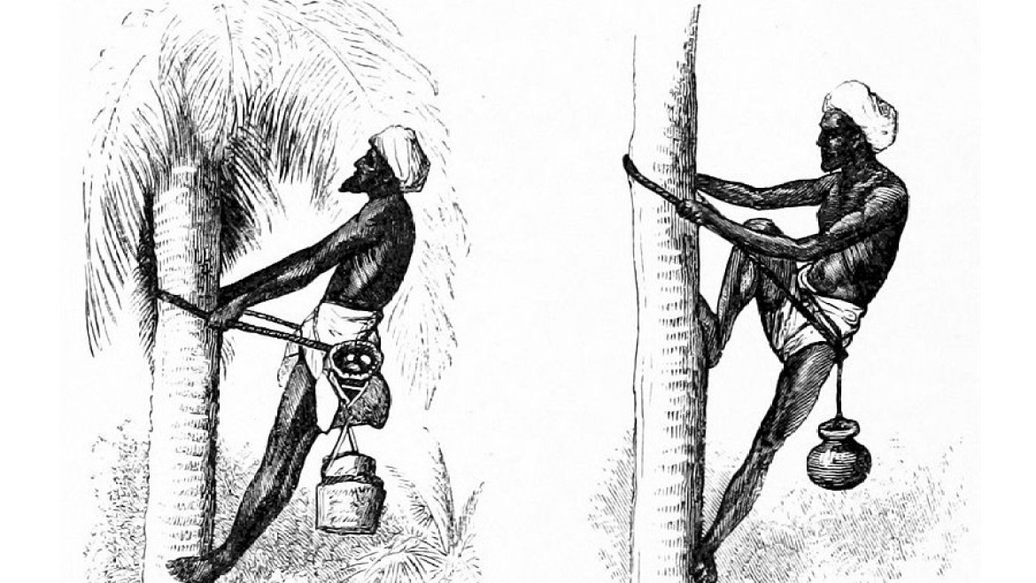 Illustration of toddy drawers by J. Duguid, 1870