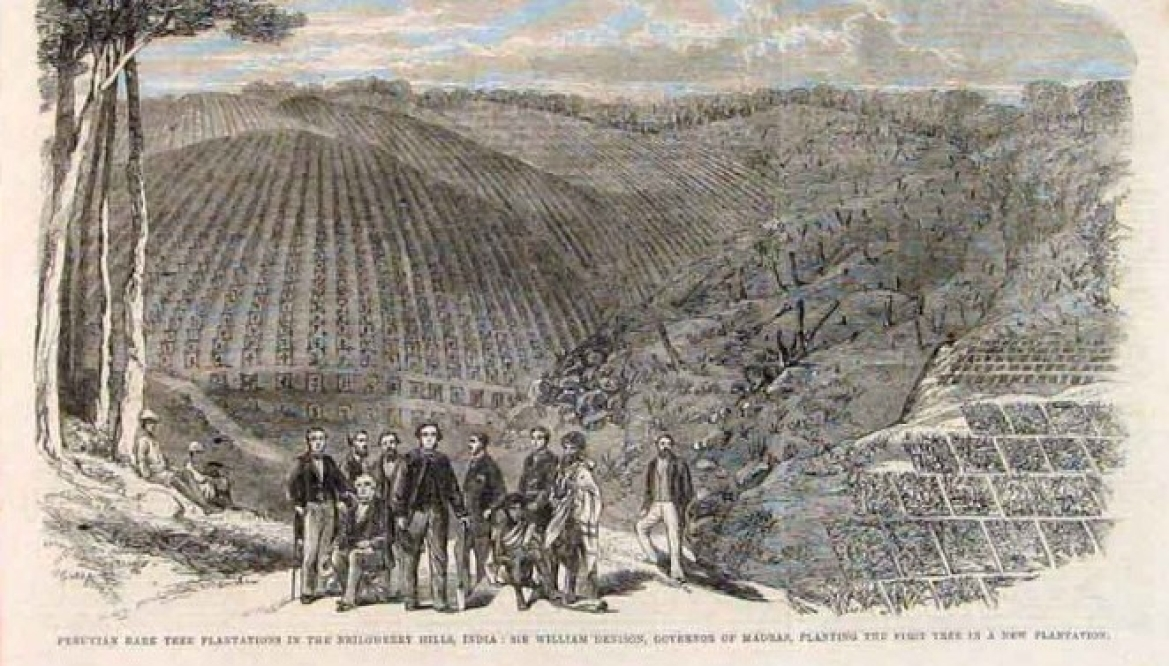 Peruvian bark plantation in India 1864