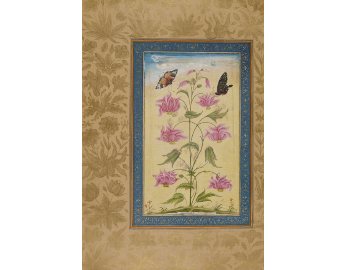 Exotic Flowers With Butterflies. Mughal, 1630-33