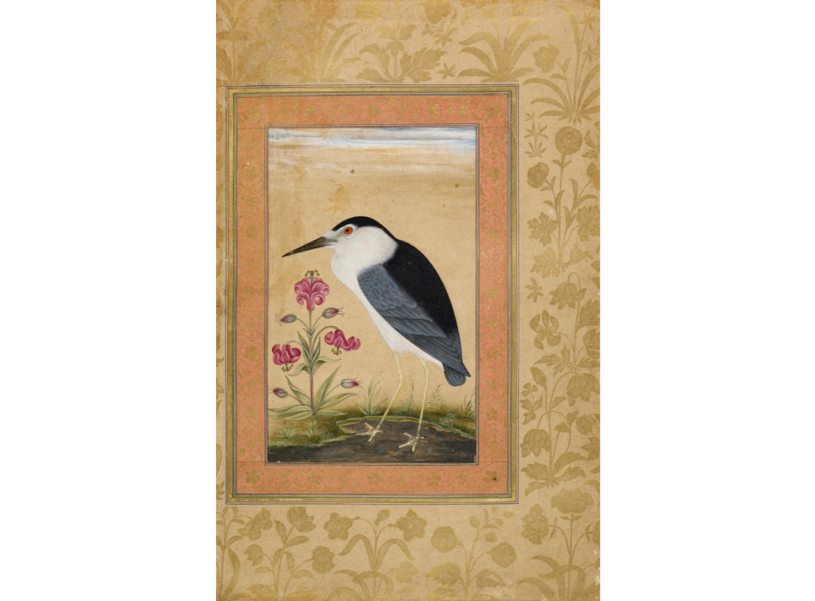 The Black-Crowned Night Heron (Nycticorax nycticorax) With A Lily. Mughal, 1630-33