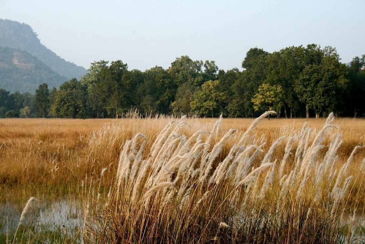 A view of the Bandhavgarh National Park
