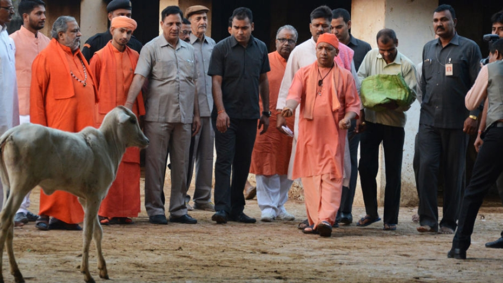 File photo Uttar Pradesh Chief Minister and Mahant of Gorakhdham Temple Yogi Adityanath feeding cows at Gaushala inside the Gorakhnath Temple on March 26, 2017 in Gorakhpur