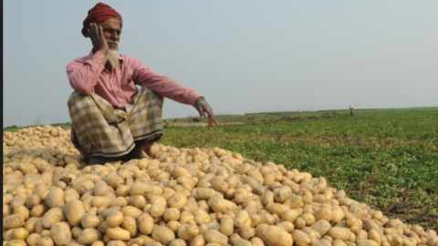 Cold storages selling potatoes at ₹2 a kilo