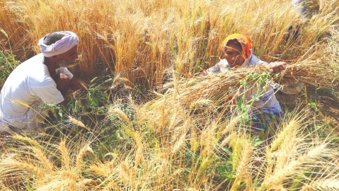 Redressal of farmers woes  need new economic thinking