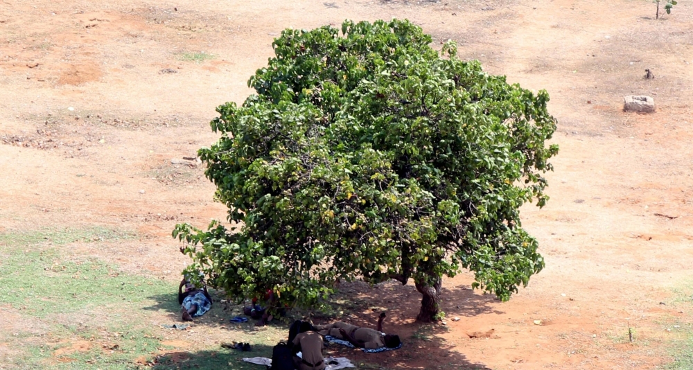 People resting under a tree as the temperature hit a high of 36 degree Celsius in Chennai on Friday.