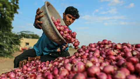 "Maharashtra govt rubs salt on onion farmers wounds', says crop was ""not good"""