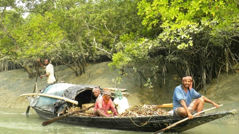 People migrating from Sundarbans as climate threat soars