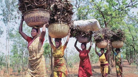 Is uprooting millions of poor tribals from their ancestral homelands ethical?