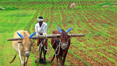 Madhya Pradesh farmers not happy with budget, income support is too low to meet the crisis
