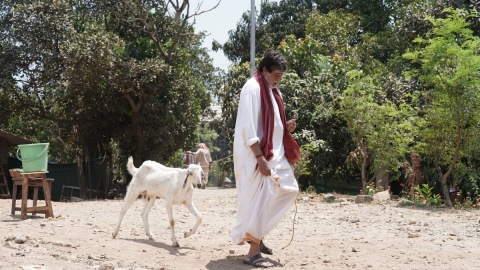 Big B 'walks' goat after Twitter banter with SRK