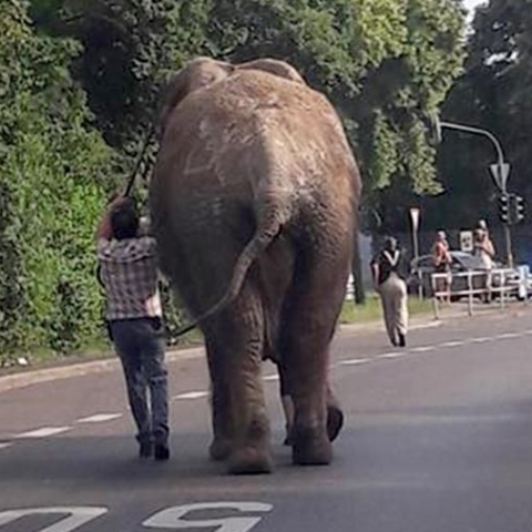 Elephant escapes German circus