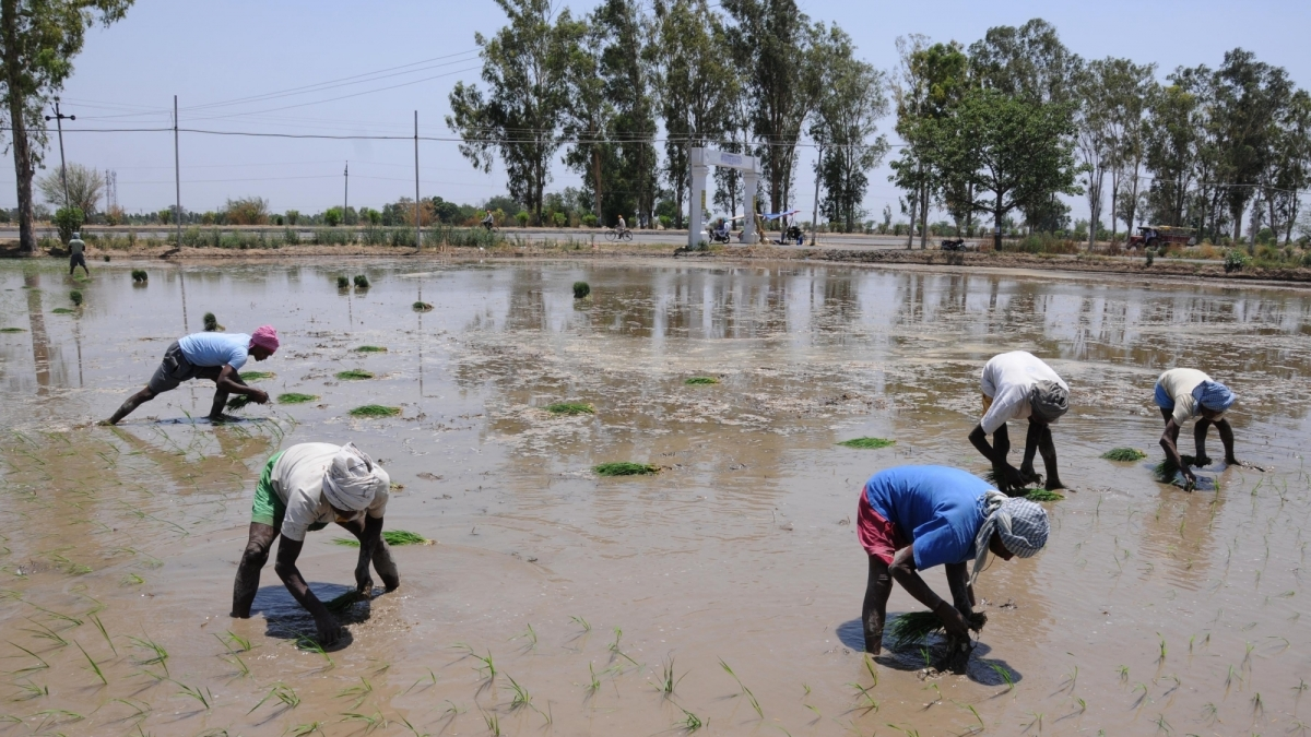 New technology may help Indian farmers double income